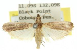 ( - 11ANIC-02036)  @11 [ ] CreativeCommons - Attribution Non-Commercial Share-Alike (2011) CSIRO/BIO Photography Group Centre for Biodiversity Genomics