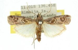 (Rambutaneia sp. C - 11ANIC-02629)  @14 [ ] CreativeCommons - Attribution Non-Commercial Share-Alike (2011) CSIRO/BIO Photography Group Centre for Biodiversity Genomics