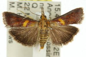 ( - 11ANIC-02839)  @15 [ ] CreativeCommons - Attribution Non-Commercial Share-Alike (2011) CSIRO/BIO Photography Group Centre for Biodiversity Genomics