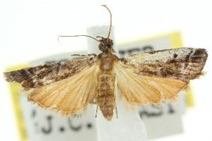 ( - 11ANIC-03484)  @11 [ ] CreativeCommons - Attribution Non-Commercial Share-Alike (2011) CSIRO/BIO Photography Group Centre for Biodiversity Genomics