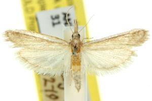 (Emmalocera syssema - 11ANIC-03845)  @11 [ ] CreativeCommons - Attribution Non-Commercial Share-Alike (2011) CSIRO/BIO Photography Group Centre for Biodiversity Genomics