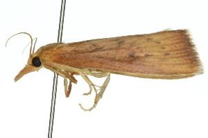(Xubida infusellus - 11ANIC-04083)  @12 [ ] CreativeCommons - Attribution Non-Commercial Share-Alike (2011) CSIRO/BIO Photography Group Centre for Biodiversity Genomics