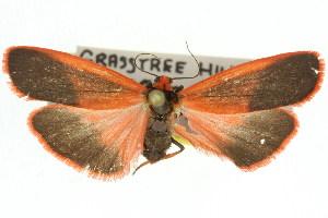(Scoliacma bicolora PS1 - 11ANIC-07931)  @14 [ ] CreativeCommons - Attribution Non-Commercial Share-Alike (2011) CSIRO/BIO Photography Group Centre for Biodiversity Genomics