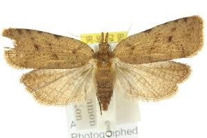 (Xenothictis - 11ANIC-10211)  @14 [ ] CreativeCommons - Attribution Non-Commercial Share-Alike (2011) CSIRO/BIO Photography Group Centre for Biodiversity Genomics