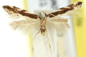 ( - 11ANIC-13767)  @11 [ ] CreativeCommons - Attribution Non-Commercial Share-Alike (2011) CSIRO/BIO Photography Group Centre for Biodiversity Genomics