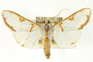 ( - BIOUG01407-F05)  @11 [ ] Copyright (2011) CSIRO/BIO Photography Group Centre for Biodiversity Genomics