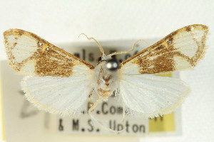 ( - BIOUG01407-F08)  @11 [ ] Copyright (2011) CSIRO/BIO Photography Group Centre for Biodiversity Genomics