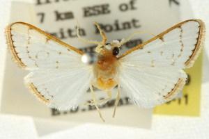 ( - BIOUG01407-F09)  @11 [ ] Copyright (2011) CSIRO/BIO Photography Group Centre for Biodiversity Genomics