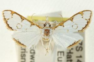 ( - BIOUG01407-F10)  @14 [ ] Copyright (2011) CSIRO/BIO Photography Group Centre for Biodiversity Genomics