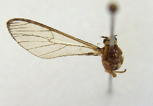 (Sphecosoma PP104 - MBe0032)  @11 [ ] Copyright (2018) Unspecified Forest Zoology and Entomology (FZE) University of Freiburg