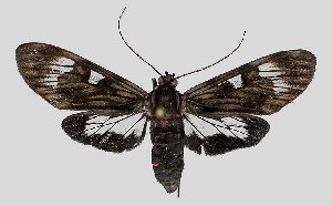 ( - MBe0130)  @11 [ ] © (2019) Unspecified Forest Zoology and Entomology (FZE) University of Freiburg