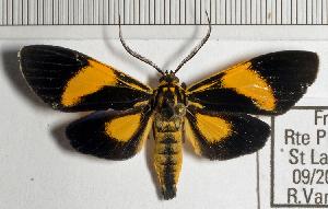 (Epidesma MBRvM04 - MBe0146)  @11 [ ] © (2019) Unspecified Forest Zoology and Entomology (FZE) University of Freiburg
