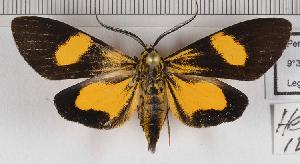 (Epidesma MBRvM05 - MBe0147)  @11 [ ] © (2019) Unspecified Forest Zoology and Entomology (FZE) University of Freiburg