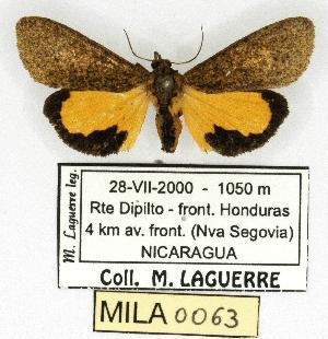 (Virbia mentiens - MILA 0063)  @12 [ ] Copyright (2010) Michel Laguerre Research Collection of Michel Laguerre