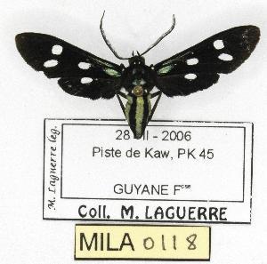 ( - MILA 0118)  @14 [ ] Copyright (2010) Michel Laguerre Research Collection of Michel Laguerre
