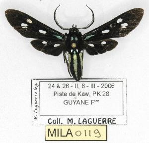 ( - MILA 0119)  @13 [ ] Copyright (2010) Michel Laguerre Research Collection of Michel Laguerre