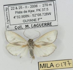 ( - MILA 0177)  @13 [ ] Copyright (2010) Michel Laguerre Research Collection of Michel Laguerre