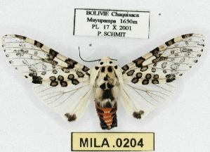 (Hypercompe detecta - MILA 0204)  @14 [ ] Copyright (2010) Michel Laguerre Research Collection of Michel Laguerre