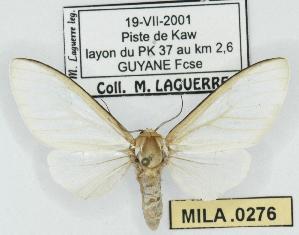 (Senecauxia - MILA 0276)  @14 [ ] Copyright (2010) Michel Laguerre Research Collection of Michel Laguerre