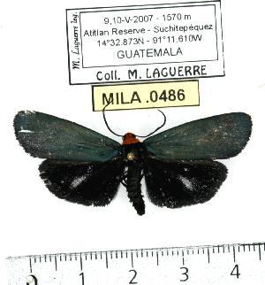 ( - MILA 0486)  @14 [ ] Copyright (2010) Michel Laguerre Research Collection of Michel Laguerre