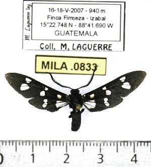 ( - MILA 0833)  @13 [ ] Copyright (2010) Michel Laguerre Research Collection of Michel Laguerre