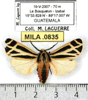 ( - MILA 0835)  @14 [ ] Copyright (2010) Michel Laguerre Research Collection of Michel Laguerre