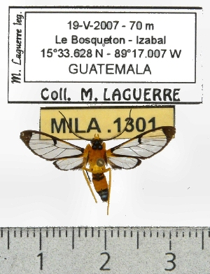 ( - MILA 1301)  @13 [ ] Copyright (2010) Michel Laguerre Research Collection of Michel Laguerre