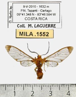 (Sphecosoma monticola - MILA 1552)  @14 [ ] Unspecified (default): All Rights Reserved  Unspecified Unspecified