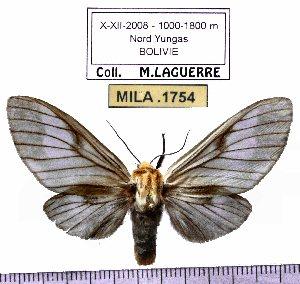 (Disconeura - MILA 1754)  @13 [ ] Copyright (2012) Michel Laguerre Research Collection of Michel Laguerre