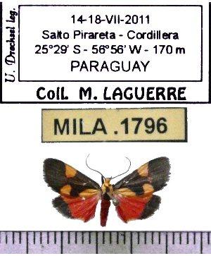 (Illice triplaga - MILA 1796)  @13 [ ] Copyright (2012) Michel Laguerre Research Collection of Michel Laguerre
