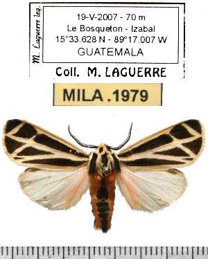 ( - MILA 1979)  @13 [ ] Copyright (2012) Michel Laguerre Research Collection of Michel Laguerre
