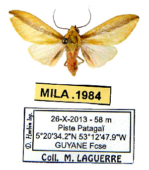 (Oodoptera - MILA 1984)  @11 [ ] CreativeCommons - Attribution Share-Alike (2016) Unspecified Universite de Bordeaux