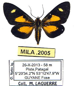 (Calodesma exposita - MILA 2005)  @13 [ ] Unspecified (default): All Rights Reserved  Unspecified Unspecified