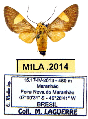 (Rhipha sp. ML2 - MILA 2014)  @14 [ ] Unspecified (default): All Rights Reserved  Unspecified Unspecified