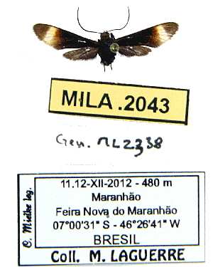 (Pompiliodes - MILA 2043)  @13 [ ] Unspecified (default): All Rights Reserved  Unspecified Unspecified
