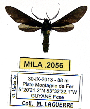 (Antichloris sp. ML2 - MILA 2056)  @13 [ ] Unspecified (default): All Rights Reserved  Unspecified Unspecified