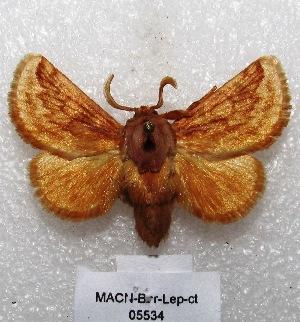 "(Perola - MACN-Bar-Lep-ct 05534)  @15 [ ] Copyright (2013) MACN Museo Argentino de Ciencias Naturales ""Bernardino Rivadavia"""