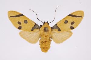 (Emurena - INB0004174850)  @15 [ ] Copyright (2012) B. Espinoza Instituto Nacional de Biodiversidad