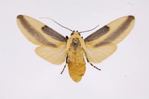 (Sutonocrea - INB0004243222)  @15 [ ] Copyright (2012) B. Espinoza Instituto Nacional de Biodiversidad