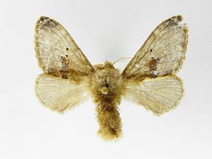 (Tolype nanaJMR01 - INB0003043540)  @14 [ ] Copyright (2012) J. Montero Instituto Nacional de Biodiversidad