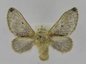 (Tolype Montero01 - INB0003083326)  @14 [ ] Copyright (2012) J. Montero Instituto Nacional de Biodiversidad