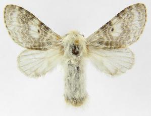 (Tolype Montero06 - INB0003172597)  @14 [ ] Copyright (2012) J. Montero Instituto Nacional de Biodiversidad