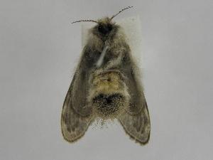 (Tolype Montero07 - INB0003219316)  @13 [ ] Copyright (2012) J. Montero Instituto Nacional de Biodiversidad