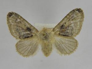 (Tolype Montero02 - INB0003309079)  @14 [ ] Copyright (2012) J. Montero Instituto Nacional de Biodiversidad