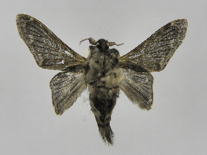 (Tolype Montero09 - INB0003328297)  @14 [ ] Copyright (2012) J. Montero Instituto Nacional de Biodiversidad