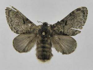 (Tolype Montero04 - INB0003351758)  @14 [ ] Copyright (2012) J. Montero Instituto Nacional de Biodiversidad