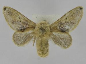 (Tolype Montero01 - INB0003434839)  @14 [ ] Copyright (2012) J. Montero Instituto Nacional de Biodiversidad