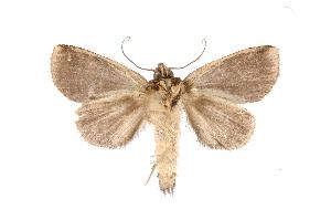 (Phastia - INB0003459910)  @15 [ ] Copyright (2012) I. Chacon Instituto Nacional de Biodiversidad