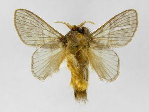 ( - INB0003545492)  @14 [ ] Copyright (2012) J. Montero Instituto Nacional de Biodiversidad