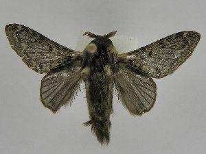 (Tolype Montero05 - INB0003772775)  @14 [ ] Copyright (2012) J. Montero Instituto Nacional de Biodiversidad